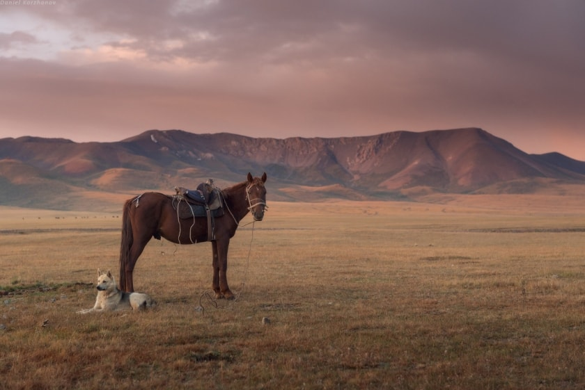 Horse and dog near Song-Kol Lake